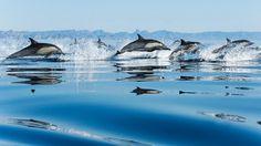 Free screensaver dolphin
