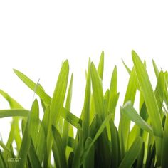 """Tischsets abwaschbar """"Gras"""" Quadrino von ARTIPICS 4er-Set Platzsets Kunststoff 30x30 cm"""