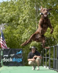 Dock-jumping dogs to make splash in Frankenmuth | MLive.com