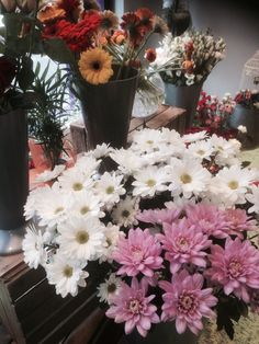 New Cut Flowers 10th April 2015