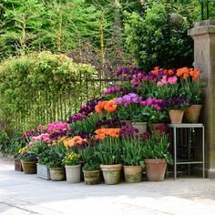 New flowers garden pots tuin ideas Tulips Garden, Garden Bulbs, Garden Pots, Planting Flowers, Tulips Flowers, Planting Succulents, Small Courtyard Gardens, Outdoor Gardens, Spring Garden