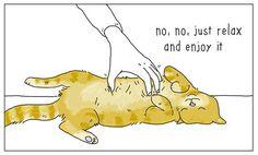 Cat 3 #TheyCanTalk