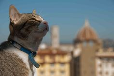 Gin the cat and Dome Gin, Cats, Animals, Gatos, Animales, Animaux, Animal, Jeans, Cat