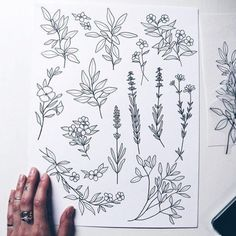Flower art drawing sketches doodles 40 ideas for 2019 Flower Art Drawing, Botanical Line Drawing, Botanical Drawings, Drawing Art, Doodle Drawings, Art Drawings Sketches, Doodle Art, Tattoo Drawings, Flower Doodles