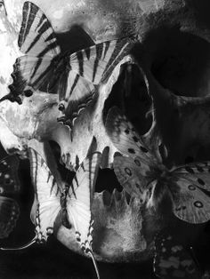 """Macabre (pronounced """"mak-kahb"""") is a quality of certain artistic or literary works, characterized by a grim or ghastly atmosphere. In these works, there is an emphasis on the details and symbols of death. Crane, Skull Reference, School For Good And Evil, Photoshop, Vanitas, Skull Tattoos, Skull And Bones, Memento Mori, Dark Beauty"""