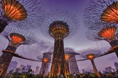 Singapore supertrees...this is an awesome example of sustainability pared with art.