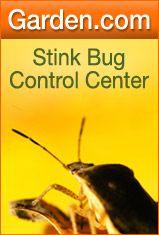 Stink Bug Control