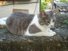 blog di Sara: la gatta Sissi