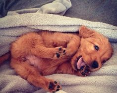 This will be the cutest thing you see today. Hands down. Share the smiles! #dogs #puppies #cute #adorable #doglovers