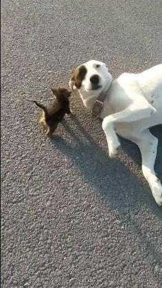 Cute Funny Dogs, Cute Funny Animals, Cute Cats, Cute Animal Videos, Funny Animal Pictures, Chien Golden Retriever, Tier Fotos, Cute Little Animals, Cool Pets