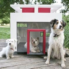 Casa para perros  Dog House  Decor