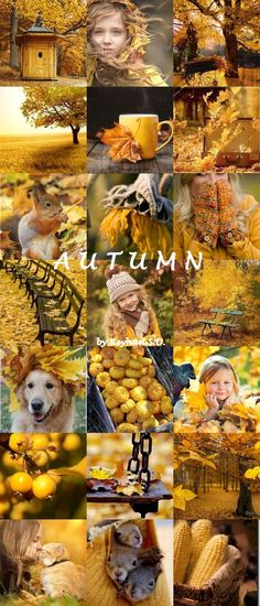 '' Autumn Shades of Yellow '' by Reyhan Seran Dursun A very beautiful collage. Collages, Beautiful Collage, Autumn Cozy, Autumn Fall, Autumn Aesthetic, Fall Pictures, Mellow Yellow, Autumn Inspiration, Happy Fall
