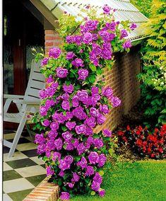 "2 x 11/"" QUILT fioriera vasi in plastica da giardino patio Fiore Pianta Fiore Nero Rustico"