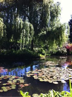 Water Lily Pond, Mon