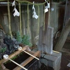 purify hatsumode, January 1st, japan, new year, purify, tokyo