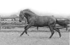 Nijinsky II(1967)Northern Dancer- Flaming Page By Bull Page. 5x5 To Phalaris And Selene. 13 Starts 11 Wins 2 Seconds. $677,117.  Became England's 15th Triple Crown Winner In 1970 In More Than 200 Years. England 1970 Horse Of The Year. Leading Sire In Eng. And Ire. In 1976. U.S. Leading Broodmare Sire In 1993 And 1994.