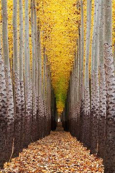 Walking towards the light.... by Dylan MacMaster | Tree farm near Boardman, Oregon.