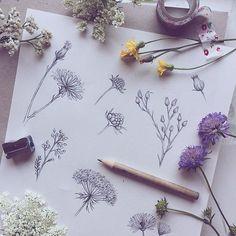 Flowers illustration by ninastajner Nature Sketch, Nature Drawing, Botanical Drawings, Botanical Prints, Art Journaling, Pencil Drawings, Art Drawings, Nature Journal, Sketchbook Inspiration