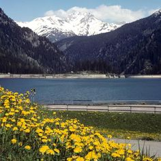 Springtime in the Swiss Alps. What better place to experience this than the municipality of Sufers in Graubunden.  #swissalps #swiss #switzerland #suisse #schweiz #schweizer #alps #springtime #sufers #graubunden #mountainvillage #travel #travelgram #worldcaptures #journey #instatravel #wildflowers #mountainlake #mountainlife #europe #europa