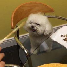cachorro na cadeira