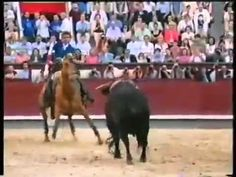 Мерлин, единственная лошадь в мире которая воспринимает корриду как игру с быком.    Её стоимость более 3 000 000 долларов. Но его владелец отказал в продаже даже за 6 000 000 долларов. В португальской корриде тореро выступают на лошадях. За всю историю ни одна лошадь не выдерживала и 5 боев. Эта выступает уже 5 лет и провела больше 200 боев.