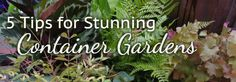 5 Steps for Stunning Container Gardens / Armstrong Garden Centers