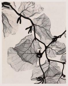 "Optic Exploration: Corylus avellana ""contorta"" (Harry Lauder's Walking Stick),  Judith K. McMillan"