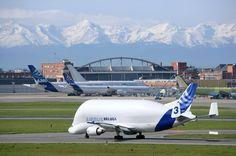 Beluga_credit-airbus.JPG