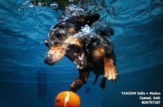 dogs underwater pics