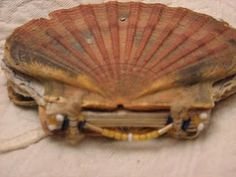 Scallop shell book