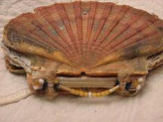 Scallop shell book