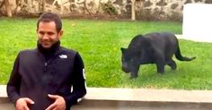 "Huge black panther stalks man and gets ready to ""attack,"" but it's okay because they're friends."