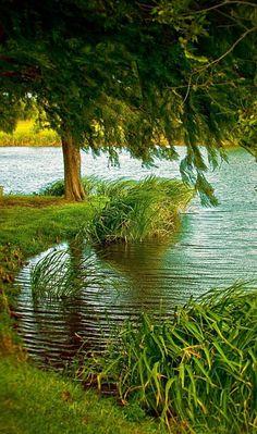 Beautiful nature in shades of green! Beautiful World, Beautiful Places, Green Nature, Nature Wallpaper, Hd Wallpaper, Nature Scenes, Nature Pictures, Amazing Nature, Beautiful Landscapes