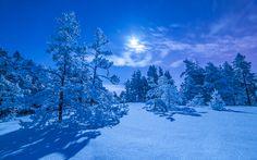 Winter landscape - null