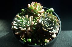 Google Image Result for http://www.paigeoneevents.com/blogger/uploaded_images/succulent-centerpiece-729930.jpg