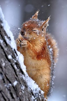 Squirrel in the snow: