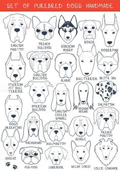 set-of-24-dogs-different-breeds-handmade-head-dog-vector-id486923872 (711×1024)