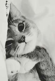 Cute snuggles.