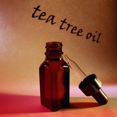 Ecco gli utilizzi del tea tree oil per curare candida, brufoli e verruche