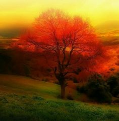 I love the pallet of colors that God has put on the earth. Imagine what HEAVEN would look like!!!