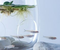 """Haruka Misawa ha diseñado una serie de acuarios minimalistas llamados""""Acuáticos"""" que incluyen objetos de impresion 3D inspirados en la flora submarina."""