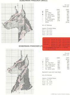 Schema punto croce Doberman