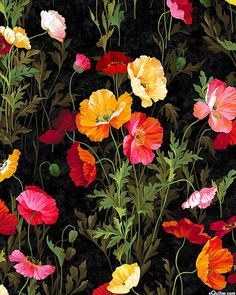 Full Bloom - Bouquet of Poppies - Black, by Deborah Edwards for Northcott Fabrics