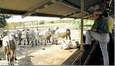 Panamá busca impulsar la exportación de carne bovina a Estados Unidos - http://panamadeverdad.com/2014/09/15/panama-busca-impulsar-la-exportacion-de-carne-bovina-estados-unidos/