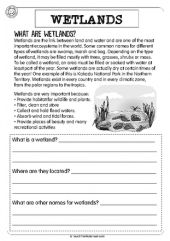 Wetlands and Swamps   Science Worksheets, Worksheets and Science