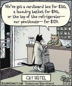 """""""Cat Hotel"""""""