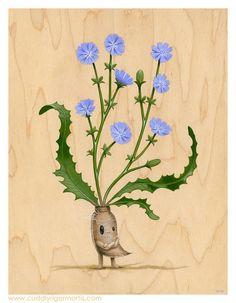 Dick Chicory