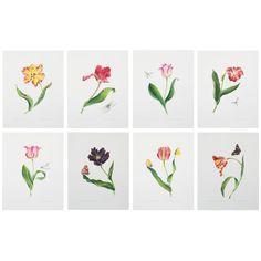 A Series of Watercolor Tulip Prints by Anna Chiara Branca | 1stdibs.com