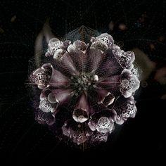 Digital Cobwebs Magnificently Beautify Nature