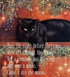 Kitty Poem